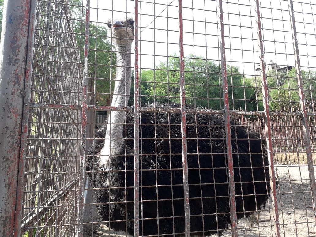 Zoológico Edén Los Sabinos